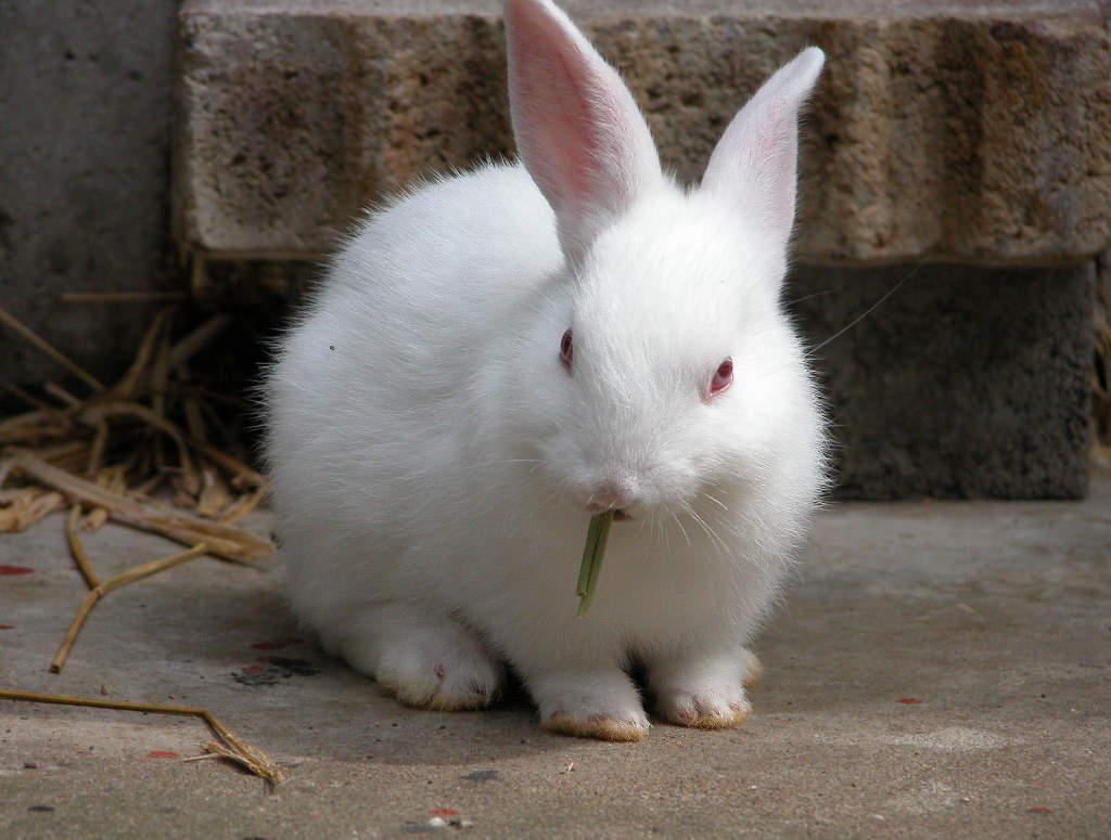 ウサギの画像 p1_19